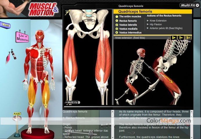 Muscle & Motion - Anatomy Capture D'écran