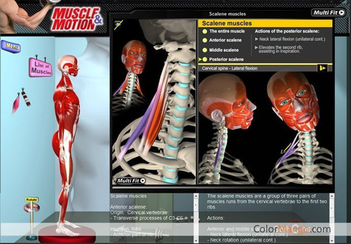 Muscle & Motion - Anatomy Screenshot